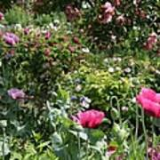 Monets Garden - Giverney - France Poster