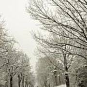 Snow Covered Road And Trees After Winter Storm Poster