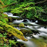 Usa, Oregon, Mt Hood National Forest Poster
