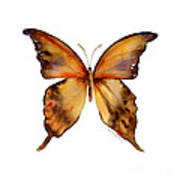 7 Yellow Gorgon Butterfly Poster