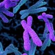 Chromosomes Poster