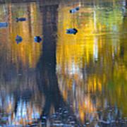 8 Ducks On Pond Poster