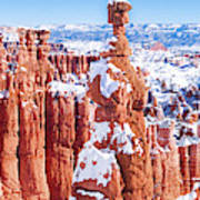 Eroded Rocks In A Canyon, Bryce Canyon Poster