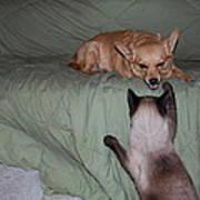 Foxy And Ninja Poster