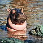 Hippopotamus In River. Serengeti. Tanzania Poster