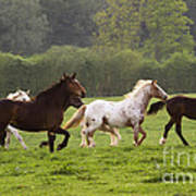 Horses On The Meadow Poster