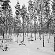 Pine Forest Winter Poster