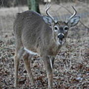 8 Point Buck Poster