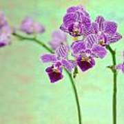 Purple Orchid-11 Poster