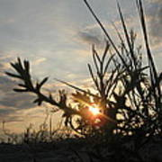 Sunshine On Raven Beach Poster