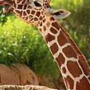 Giraff Poster