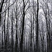 Trees In Winter Poster