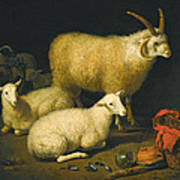 A Barn Interior With A Four-horned Ram And Four Ewes And A Goat Poster