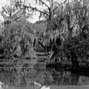 A Bayou Scene In Louisiana Poster