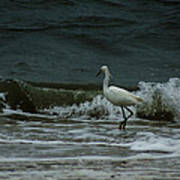 A Beautiful Snowy White Egret On Hilton Head Island Beach Poster