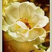 A Bee And Rose Poster