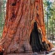 A Big Tree Poster