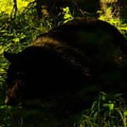 A Black Bear Poster