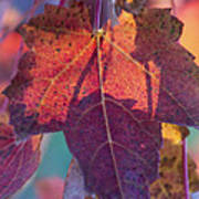 A Breath Of Autumn Poster by Dana Moyer