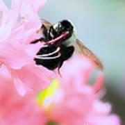 Bumble Bee And Azalea Poster