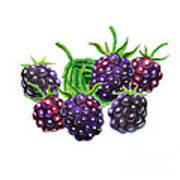A Bunch Of Blackberries Poster