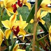 A Cage Of Canary Cymbidiums Poster