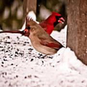A Cardinal Couple Poster