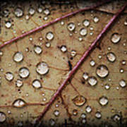 A Close Up Of A Wet Leaf Poster