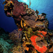 A Colorful Reef Scene With Sunburst Poster