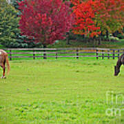 A Couple Horses And Beautiful Autumn Trees Poster