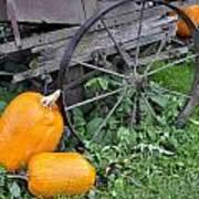 A Crop Of Pumpkins Poster