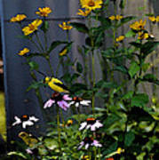 A Cute Couple Of Yellow Finches Poster