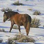 A Day In The Life Of  A Wild Horse  Poster by Jeanne  Bencich-Nations