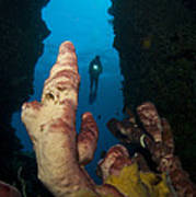 A Diver Looks Into A Cavern Poster by Steve Jones