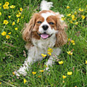 A Dog's Buttercup Heaven Poster by Jo Collins