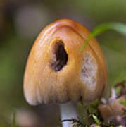 A Fairytale Mushroom Poster by Sarah Crites