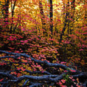 A Fall Forest  Poster