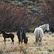 A Family Of Three - Wild Horses - Green Mountain - Wyoming Poster