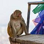 A Female Macaque On Top Of Wall Poster