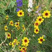 A Field Bouquet Poster