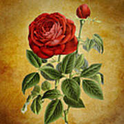 A Fifth Vintage Rose Poster