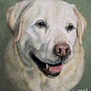 A Fine Old Lady Yellow Labrador Portrait Poster