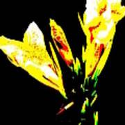 A Flower Poster