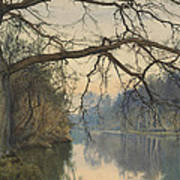 A Great Tree On A Riverbank Poster