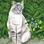 A Grey Cat At A Garden Poster