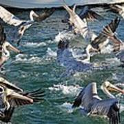 A Group Of Pelicans Poster