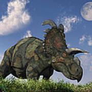 A Herd Of Albertaceratops Grazing Poster