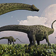 A Herd Of Diplodocus Sauropod Dinosaurs Poster