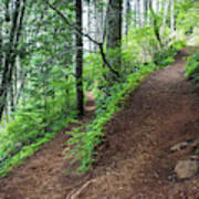 A Hiking Trail Goes Up Saddle Mountain Poster