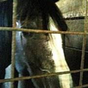 A Horses Head Poster